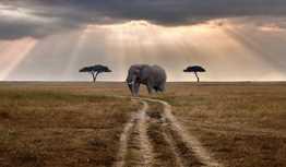 Travel Guide for Tanzania