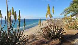 Visit Fuerteventura to Enjoy the Best Beaches in Europe