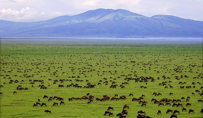 Best Safari Destinations